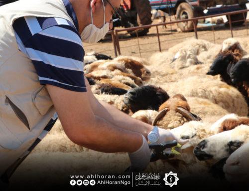 البدء بمرحلة جديدة في مشروع دعم الثروة الحيوانية في الشمال السوري